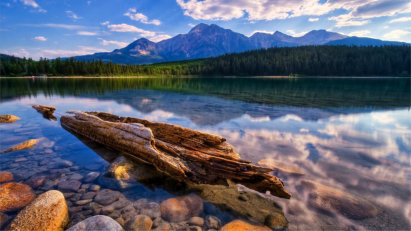 Clear mountain stream with driftwood near the shore
